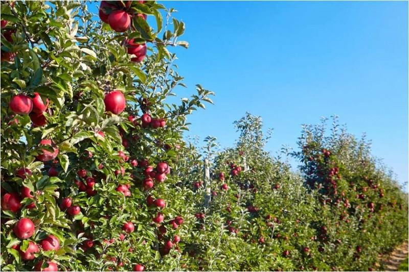 10 плюсов смешанной посадки плодовых деревьев и ягодных кустарников