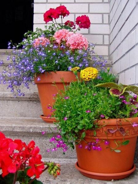 9 основных правил выращивания растений в кашпо, вазонах, уличных горшках