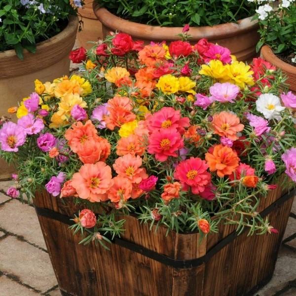 Цветы для сада, которые будут цвести все лето – посадите их и наслаждайтесь красотой