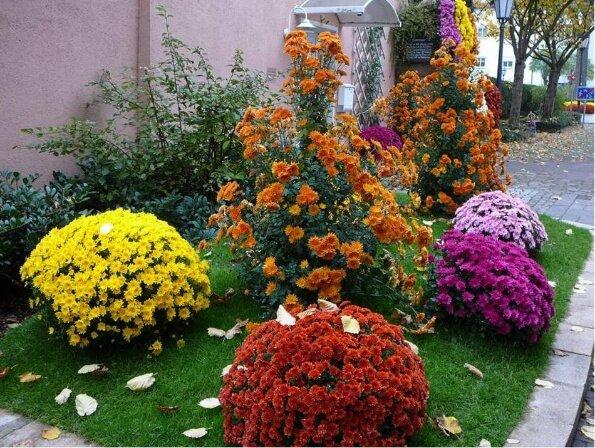 Цветы, которые сеют на рассаду в феврале — часть 6