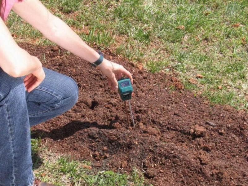 Как и чем правильно определить кислотность грунта?