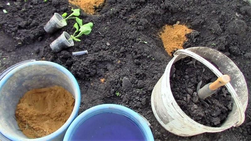 Как правильно садить баклажаны на рассаду