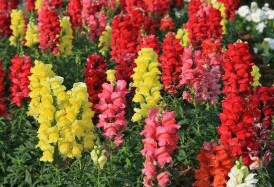 Какие дачные цветы можно сажать на рассаду в марте – не упустите сроки