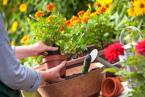 Когда сажать цветы на рассаду в 2020 году по лунному календарю