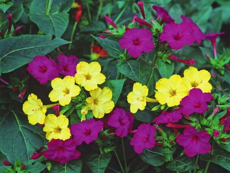 Композиция ароматов в саду: растения с душистыми цветами