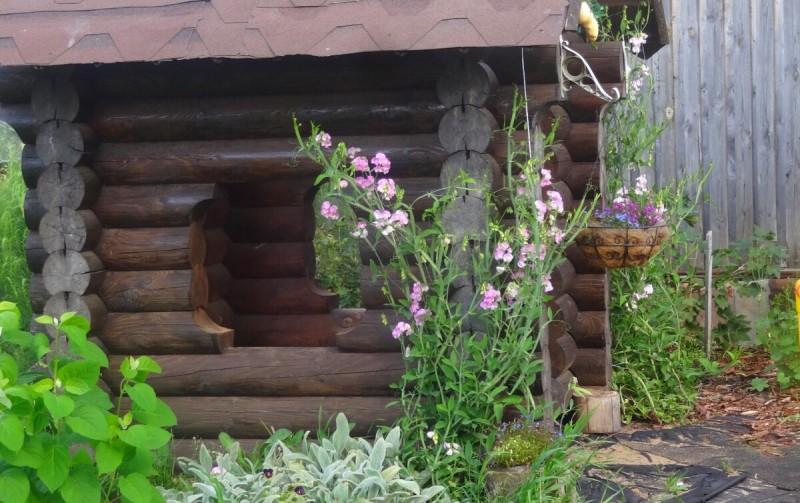 Лобелия ампельная, как сохранить зимой, как посадить.