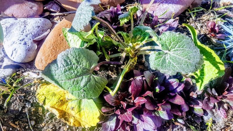 Одно неосторожно посаженное растение едва не погубило весь мой цветник