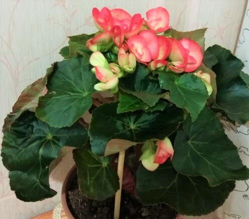 Почему желтеют листья у комнатных растений. Разгадка обрадовала. Простой совет помог спасти мои цветы.