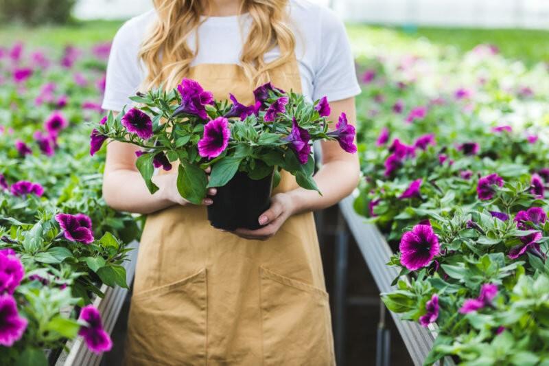 Подкормка для буйного цветения петунии: использую 4 года и всем советую