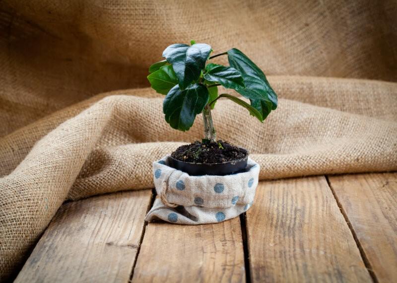 Растения-«свахи»: 5 комнатных цветов, на которые мужчины слетаются, как мухи на мед