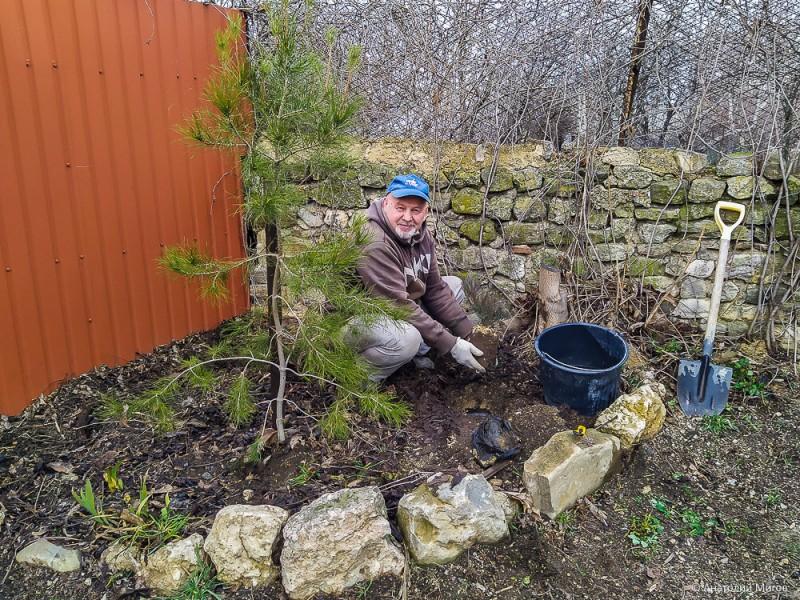 Улучшаем пространство перед домом: посадили можжевельник