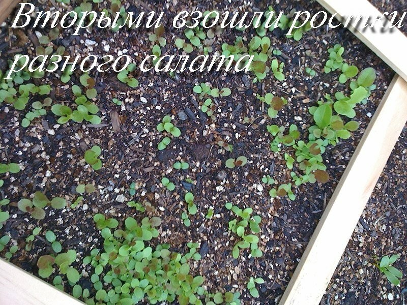 Урожайная оригинальная грядка - клумба на 1 кв. м., схема и мастер-класс