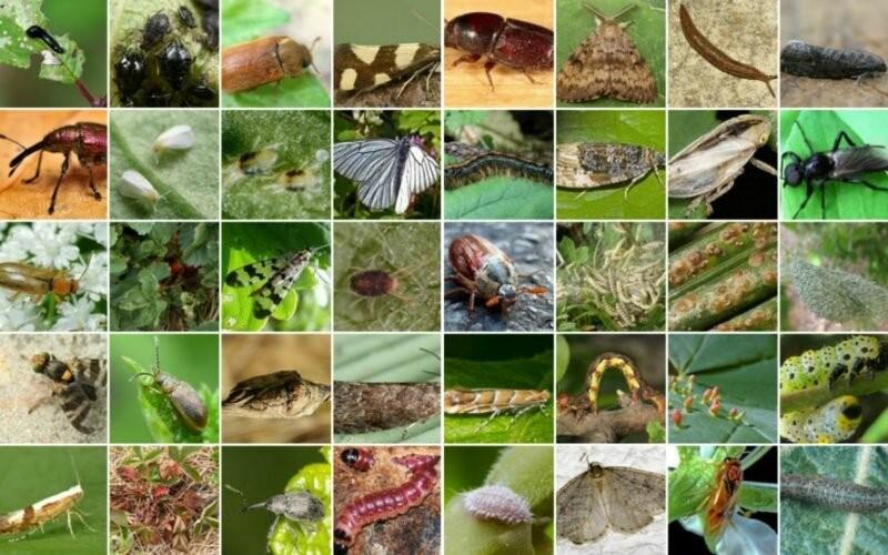 Чем обрабатывают растения от болезней и вредителей
