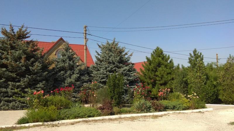 Что посадить перед домом: кустарники и деревья, которые растут почти без присмотра