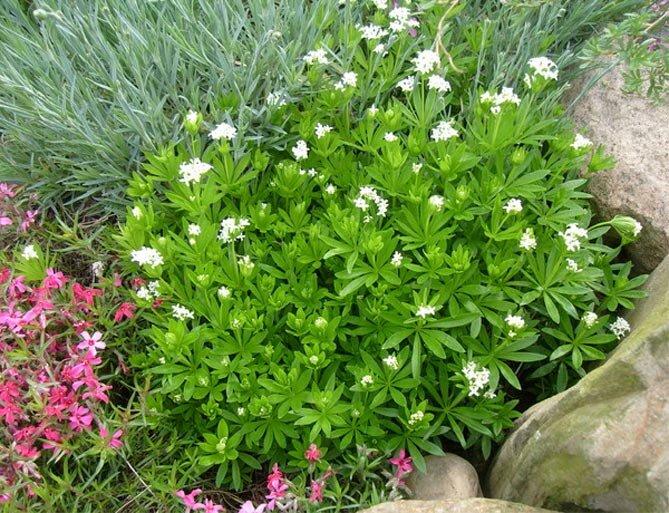 Цветники с вуальными растениями - скромное обаяние изящества