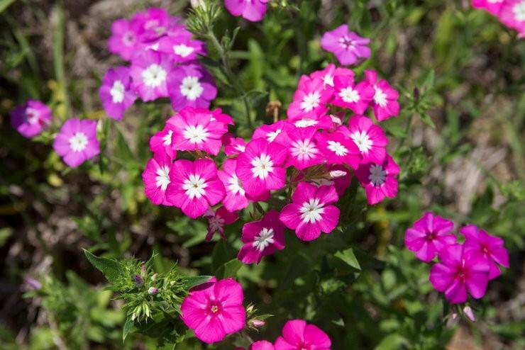 Цветы, которые сеют на рассаду в марте — часть 4