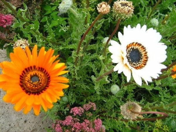 Цветы, которые сеют на рассаду в марте — часть 5