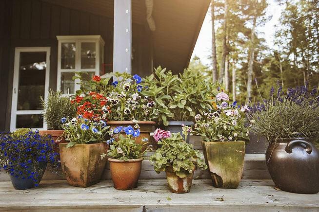 Дачный сезон: лучшие советы для красивого дачного участка