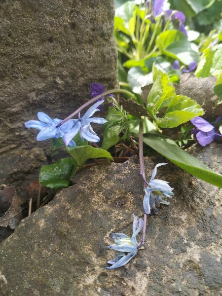 Дикие растения на дачном участке