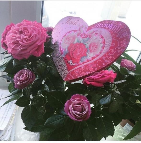 """Домашние цветы с полки """"уценка"""". Розы, бегония, фиалки."""