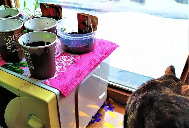 Две мои принцессы Маркиза и Масяня заинтересовались стаканчиками на подоконнике.