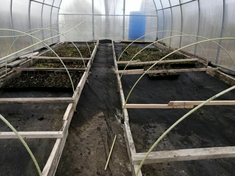 Фермерское хозяйство с нуля. Первые весенние работы в теплице и важность полива саженцев в зимний период