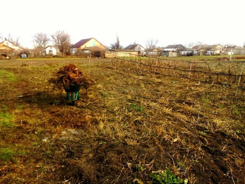 Где мы выбрали место для своего сада. И мнение соседа на этот счет