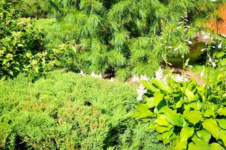 Хосты в ландшафтном дизайне вашего участка: с чем посадить и составить красивые композиции: много фото