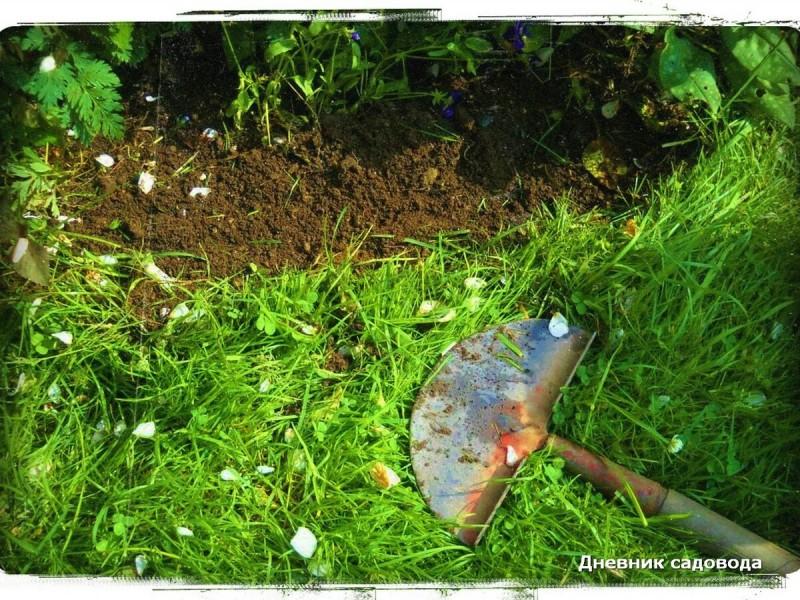 Как я избавился от одуванчика на огороде - мои способы на долгие времена