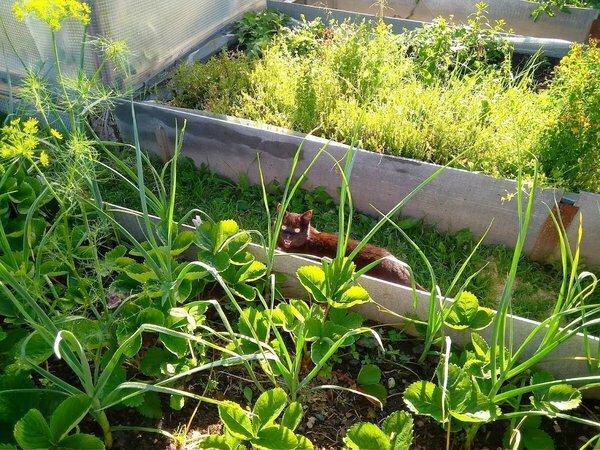 Как сделать стационарные грядки в огороде