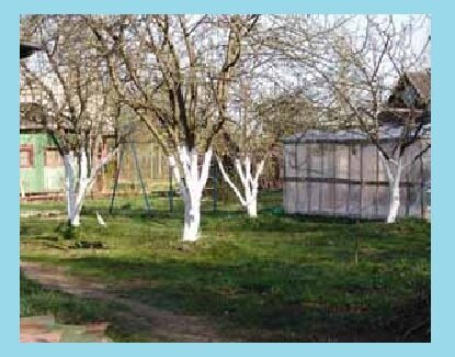 Как уберечь свой сад, чтобы летом 2020 года не было в нем вредителей
