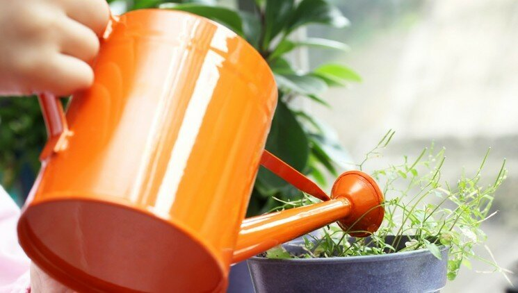 Как выращивать рассаду овощей в домашних условиях