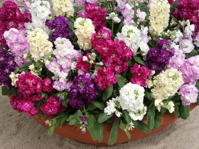 Какие цветы я сажаю на рассаду в начале марта