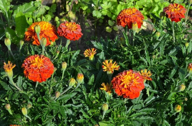 Какие растения нужно сеять в марте на рассаду. Список самых красивых цветов