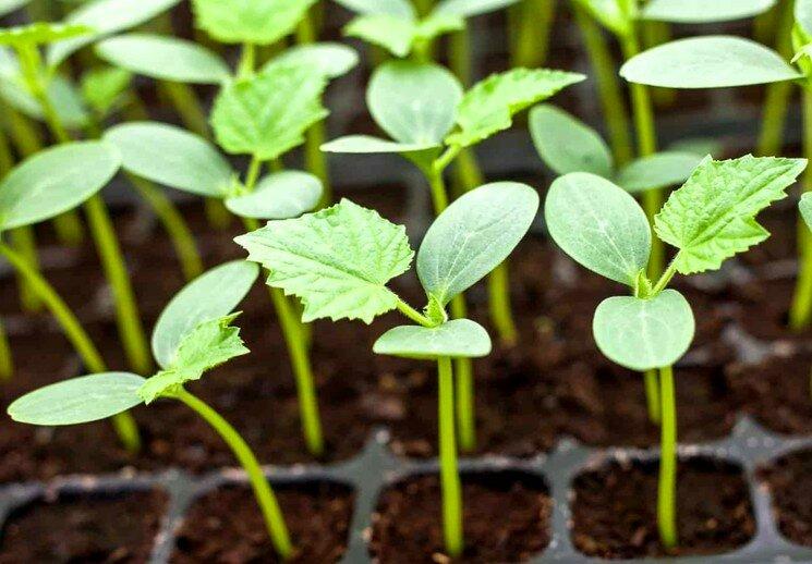 Когда сажать семена овощей и цветов — сроки посева семян на рассаду
