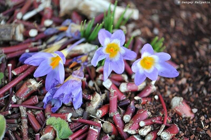 Мой сад в конце февраля