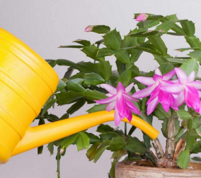 Можно ли еще спасти цветок, листья которого сильно почернели