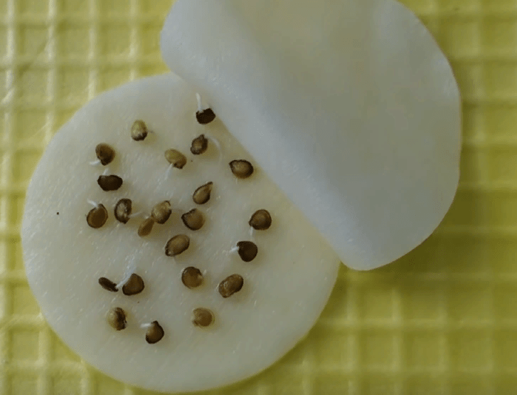 Нужно ли замачивать семена помидор перед посадкой на рассаду