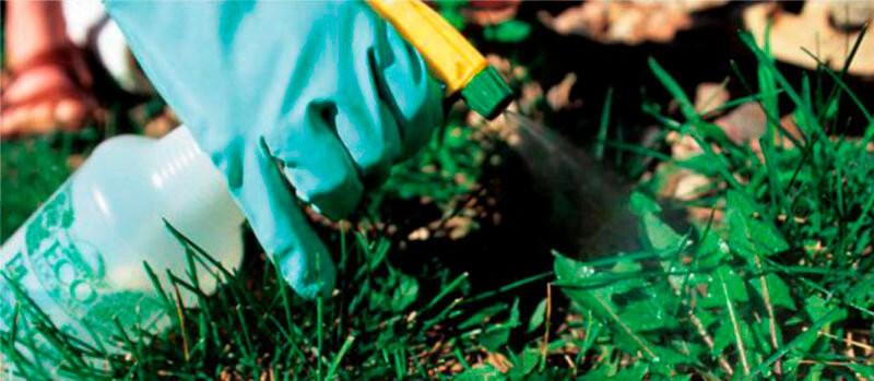 Обработка земли от сорняков: что нужно применить?