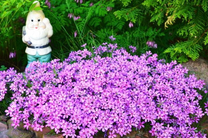 Почвопокровные растения: названия и фото цветков