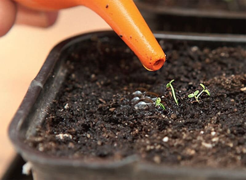Простой метод, как вырастить прекрасную лобелию из семян на своем участке. Личный опыт