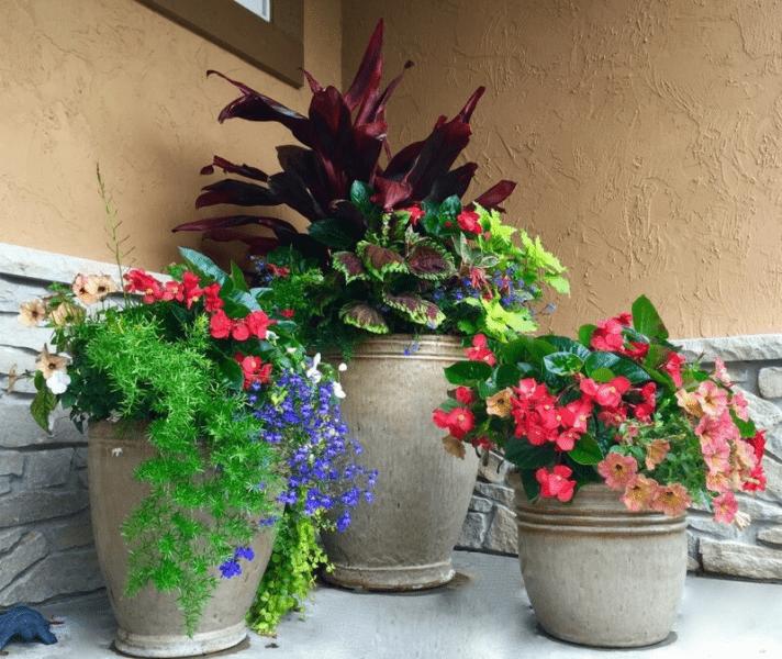 Растения для уличного кашпо. ТОП-5 украшений для вашего участка!