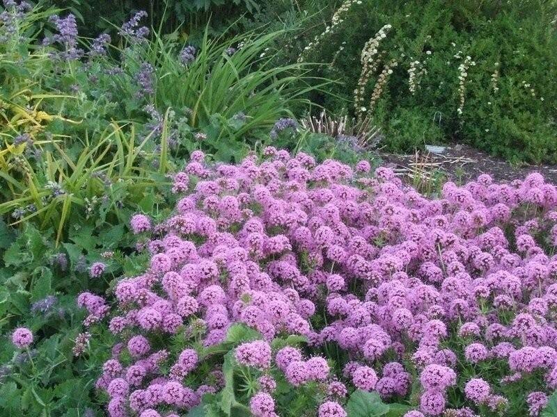 Сад в розовом цвете. Подборка растений.