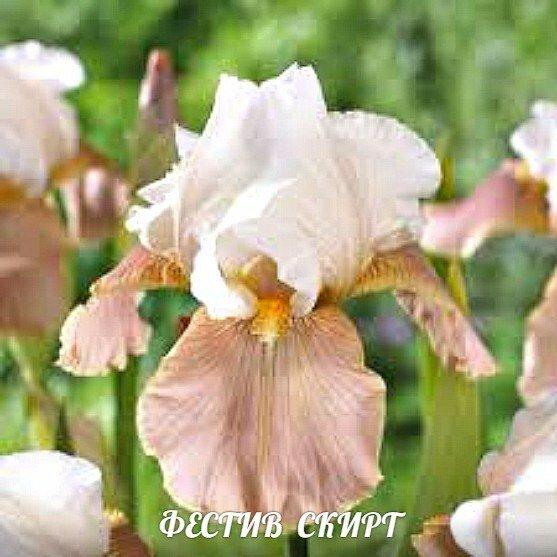 Самые разные многолетние цветы для Сибири. Прошли проверку морозами и временем