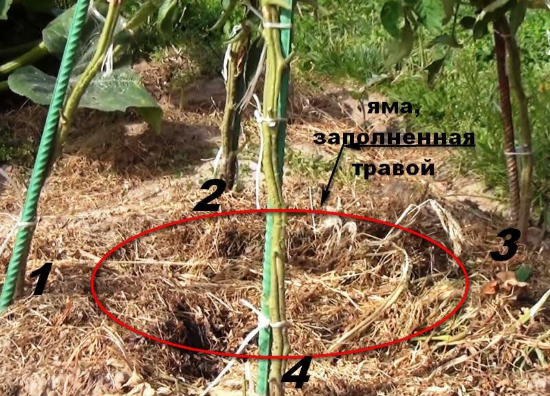 Супер способ выращивания томатов в открытом грунте. Посадка квадратно-гнездовая