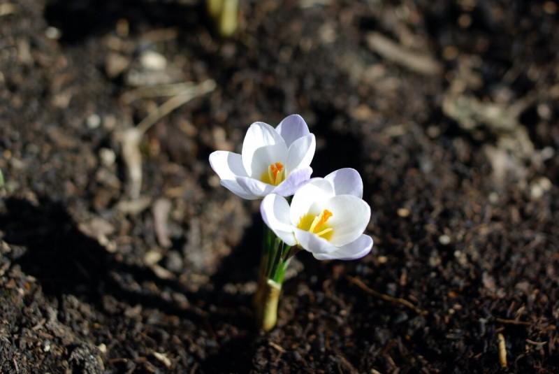 Вторая волна весеннего цветения
