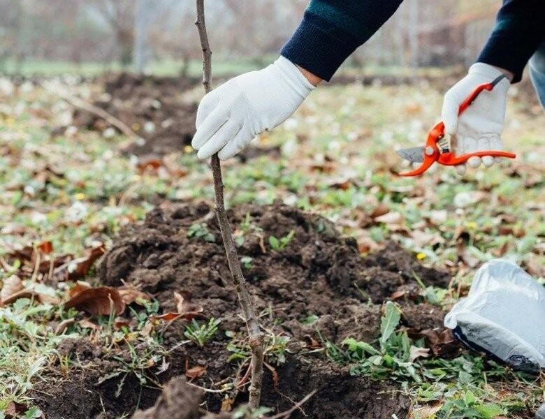 Выезд специалиста по защите растений: полный рабочий день