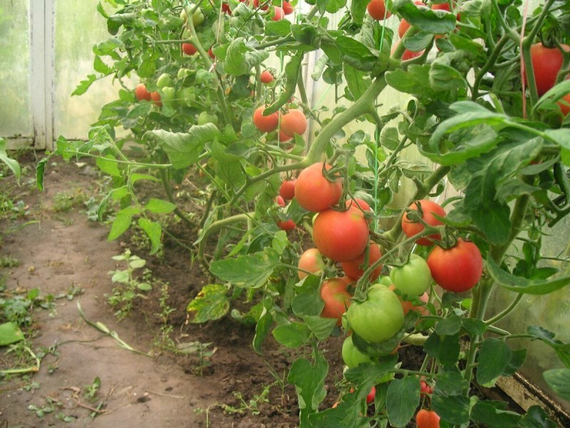 Выращивание овощей без рассады