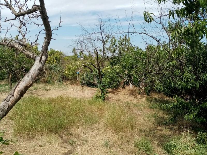 Выращивание тыквы на деревьях (личный опыт)