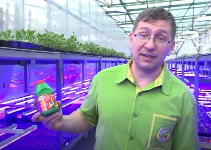 Чем лучше кормить рассаду после пикировки для ускорения роста? Абсолютно безопасно.